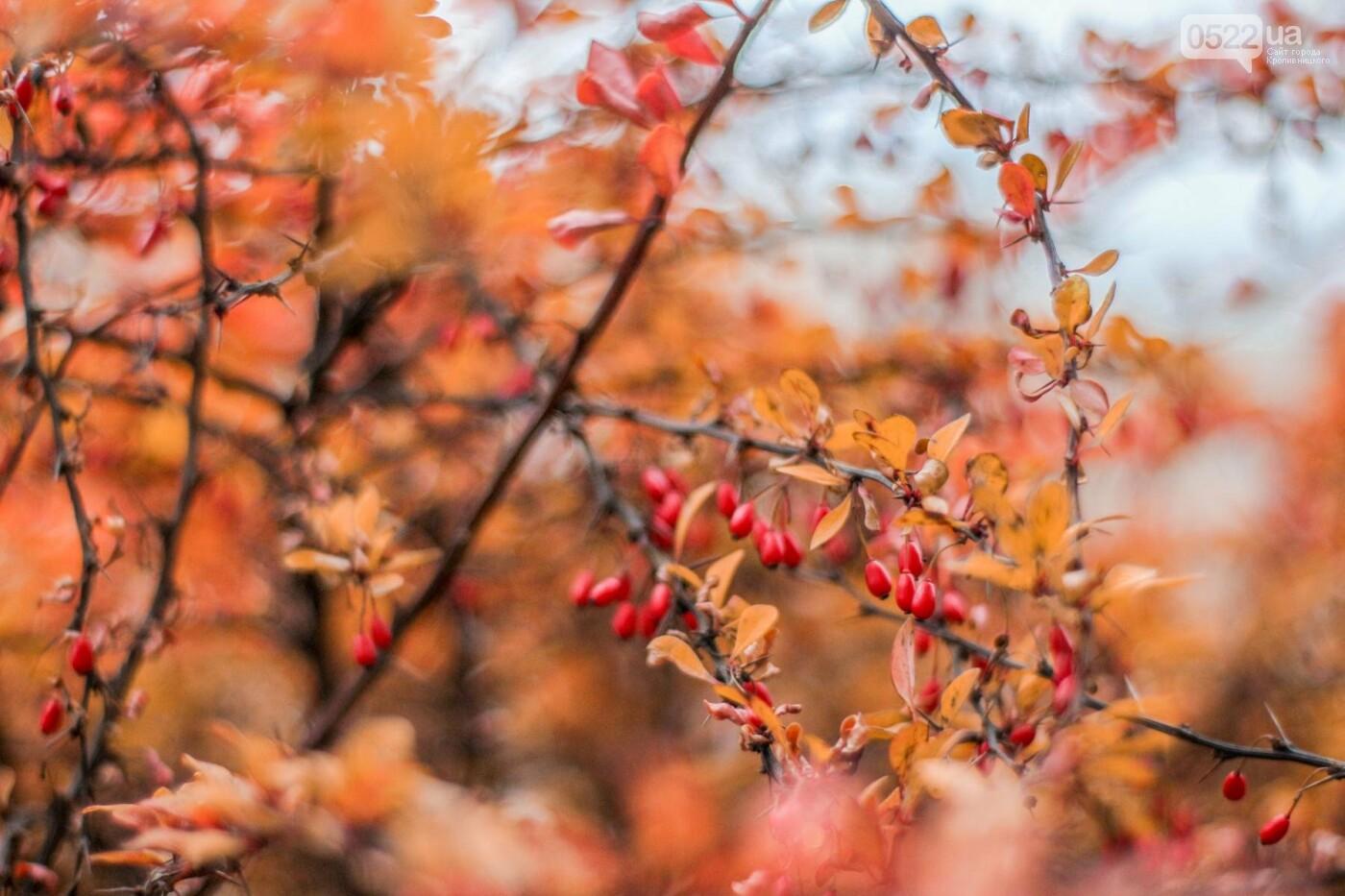 Листопад у Кропивницькому (Фото), фото-8