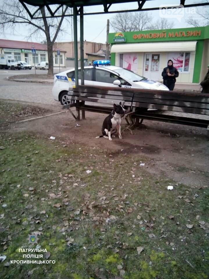 Патрульні знайшли господаря бійцівської собаки, який залишив її, прив'язану на зупинці, і не повернувся, фото-1