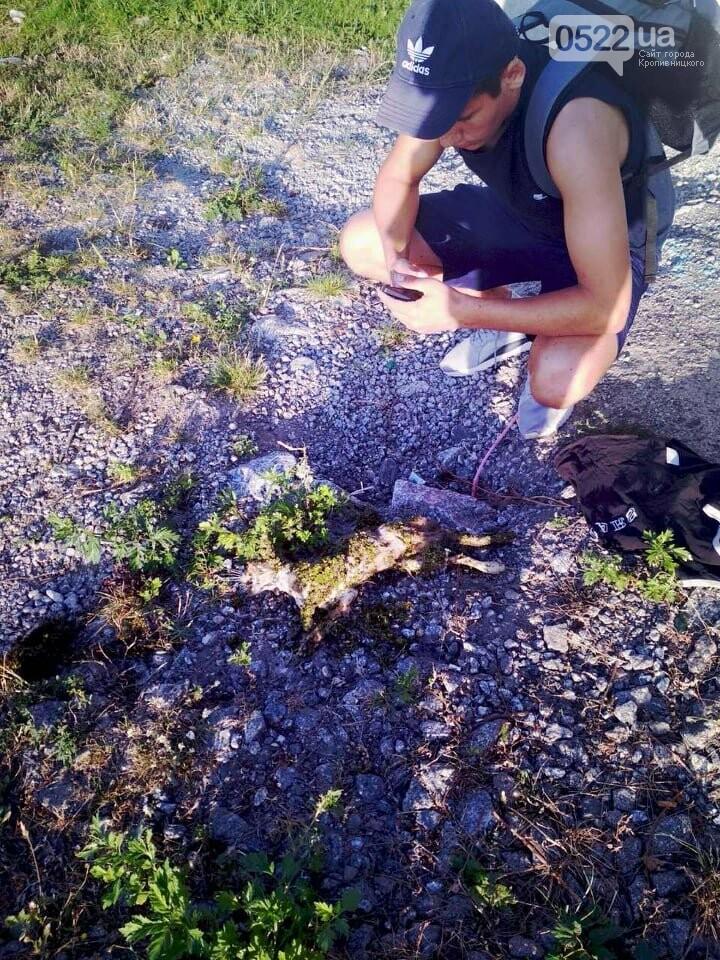 Кропивницький повинен знати своїх героїв: на Козачому острові хлопчина врятував кошеня (ФОТО 18+), фото-1