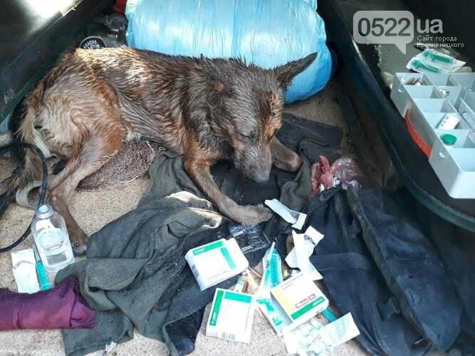 У Кропивницькому невідомі вбили собаку, ще одну вдалося врятувати, фото-1
