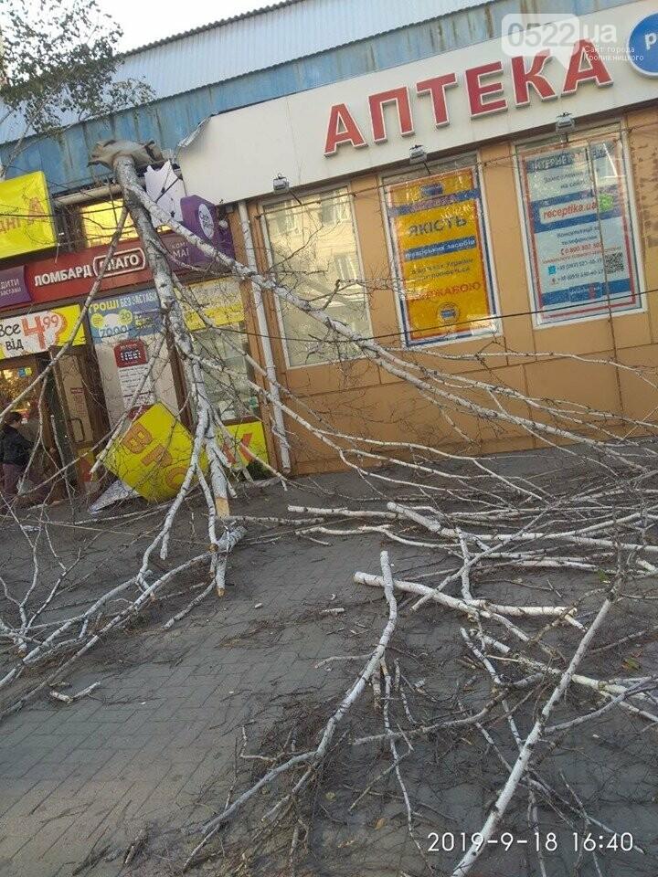 У Кропивницькому дерево, яке впало на зупинці, пошкодило ногу жінці (ФОТО), фото-4