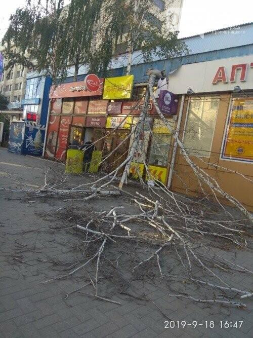У Кропивницькому дерево, яке впало на зупинці, пошкодило ногу жінці (ФОТО), фото-1