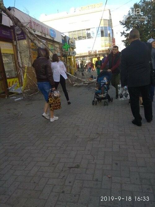 У Кропивницькому дерево, яке впало на зупинці, пошкодило ногу жінці (ФОТО), фото-3