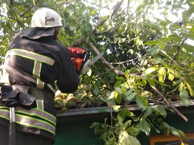 На Кіровоградщині чотири рази знадобилася допомога рятувальників у ліквідації аварійних дерев, фото-1