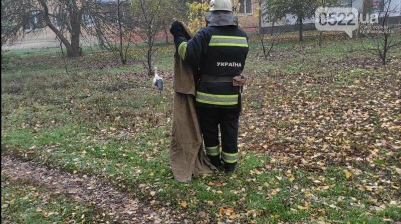 В Олександрії рятувальники спіймали голодного та знесиленого лелеку, фото-1