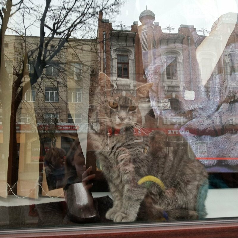 У Кропивницькому активісти закликали людей відмовитися від хутра (ФОТОРЕПОРТАЖ), фото-9