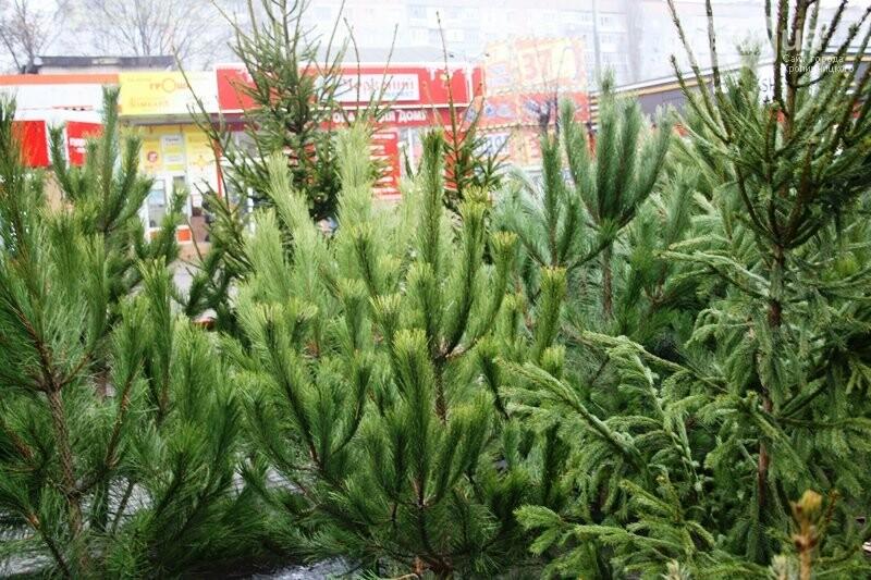 У Кропивницькому відкрився передсвятковий ярмарок, фото-2