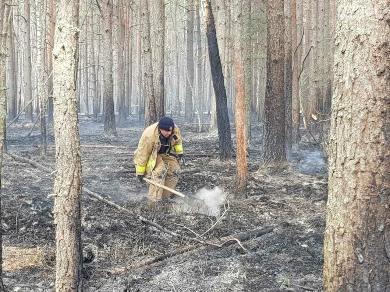 Зведений підрозділ кіровоградського гарнізону допомагає долати лісові пожежі на Київщині, фото-8