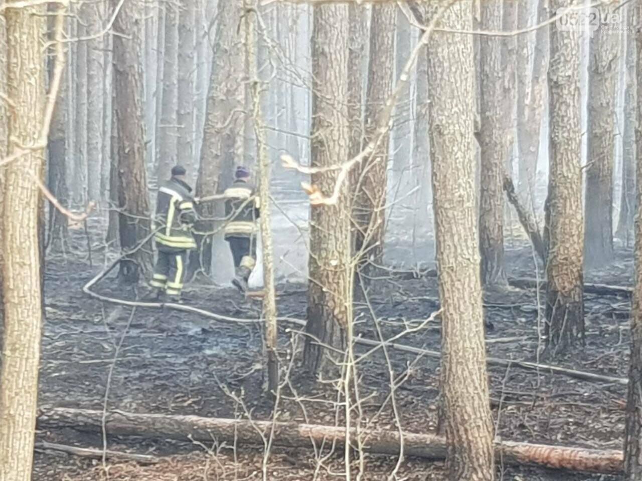 Зведений підрозділ кіровоградського гарнізону допомагає долати лісові пожежі на Київщині, фото-1