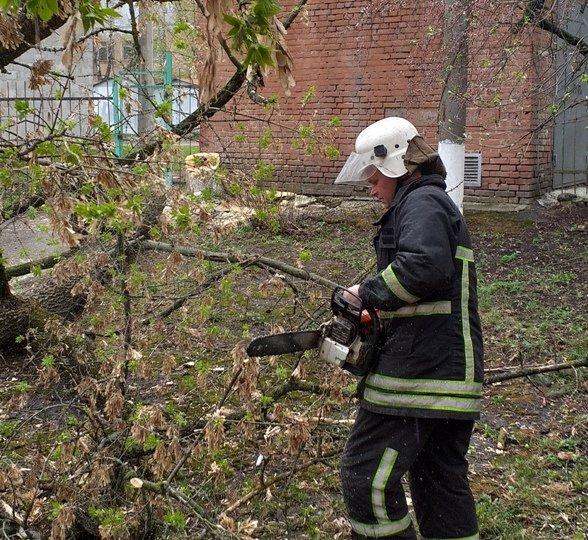 Аварiйне дерево ледь не впало на вiдвiдувачiв парку на Кiровоградщинi (ФОТО), фото-1