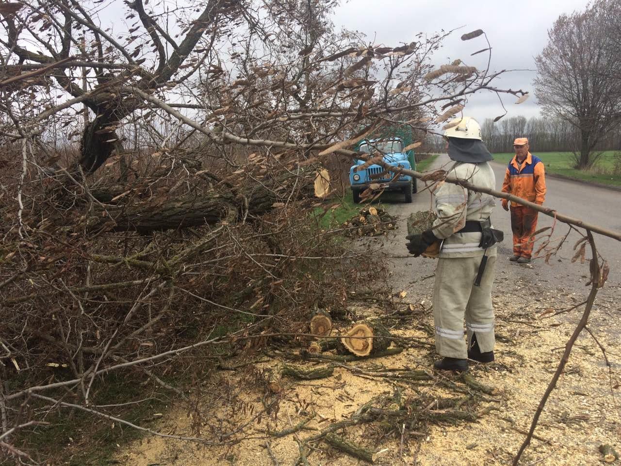 Аварiйне дерево ледь не впало на вiдвiдувачiв парку на Кiровоградщинi (ФОТО), фото-2