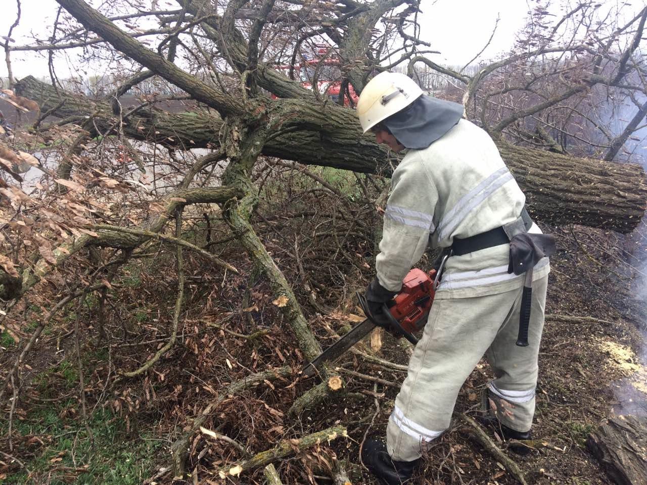 Аварiйне дерево ледь не впало на вiдвiдувачiв парку на Кiровоградщинi (ФОТО), фото-3