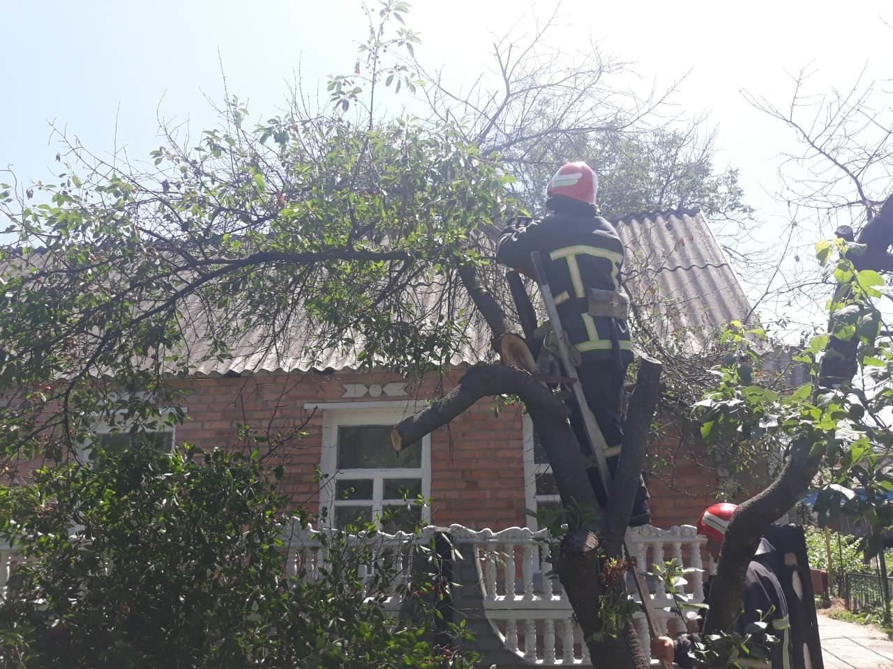 Рятувальники Кіровоградщини ліквідували загрозу від аварійних дерев (ФОТО), фото-2