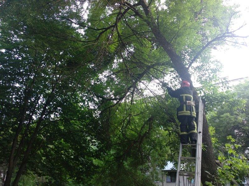 Рятувальники Кіровоградщини ліквідували загрозу від аварійних дерев (ФОТО), фото-1