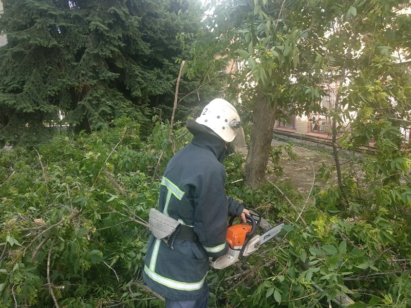 Кіровоградська область: рятувальники спиляли аварійні дерева (ФОТО), фото-1
