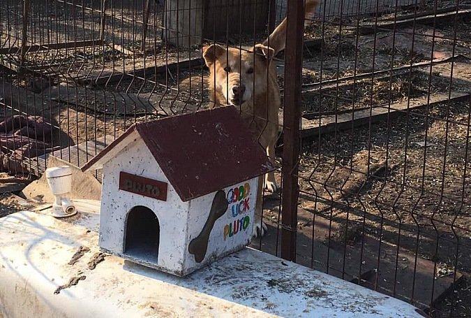 Кропивничан запрошують долучитися до будівництва паркану довкола притулку для тварин, фото-1