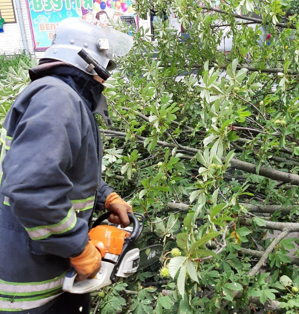 Бійці кіровоградського гарнізону прибрали аварійні дерева (ФОТО), фото-1