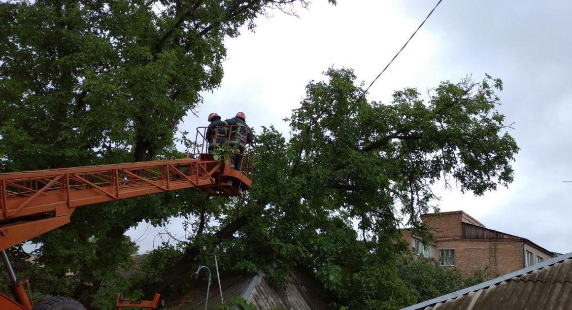 Бійці кіровоградського гарнізону прибрали аварійні дерева (ФОТО), фото-3