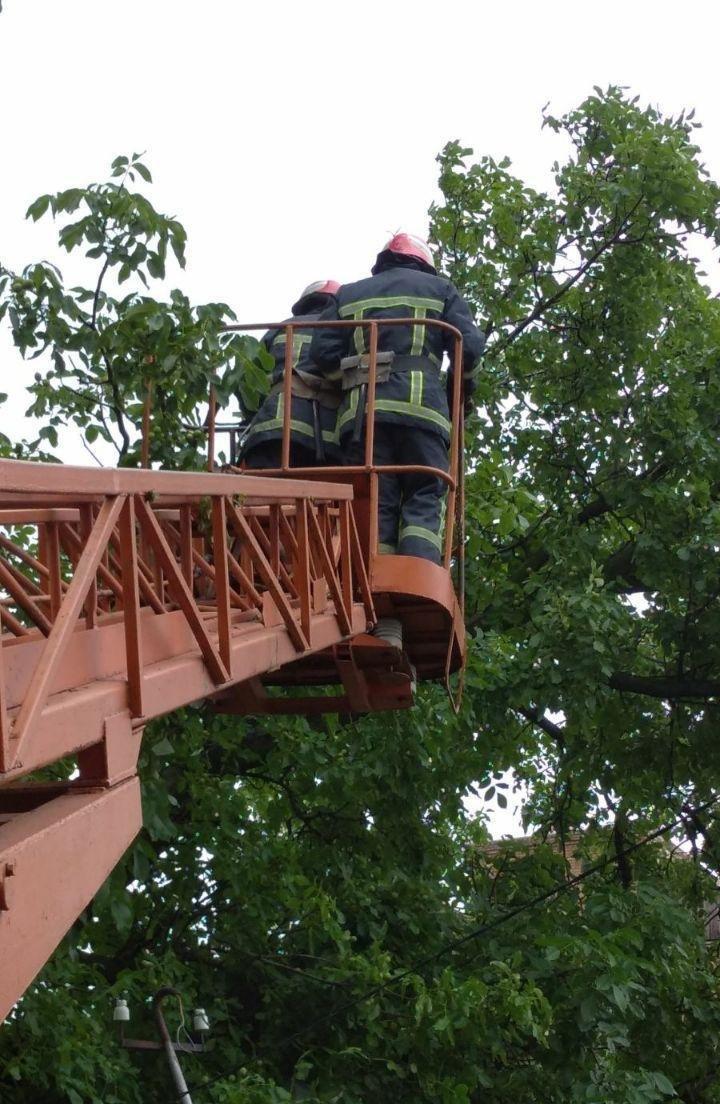 Бійці кіровоградського гарнізону прибрали аварійні дерева (ФОТО), фото-4