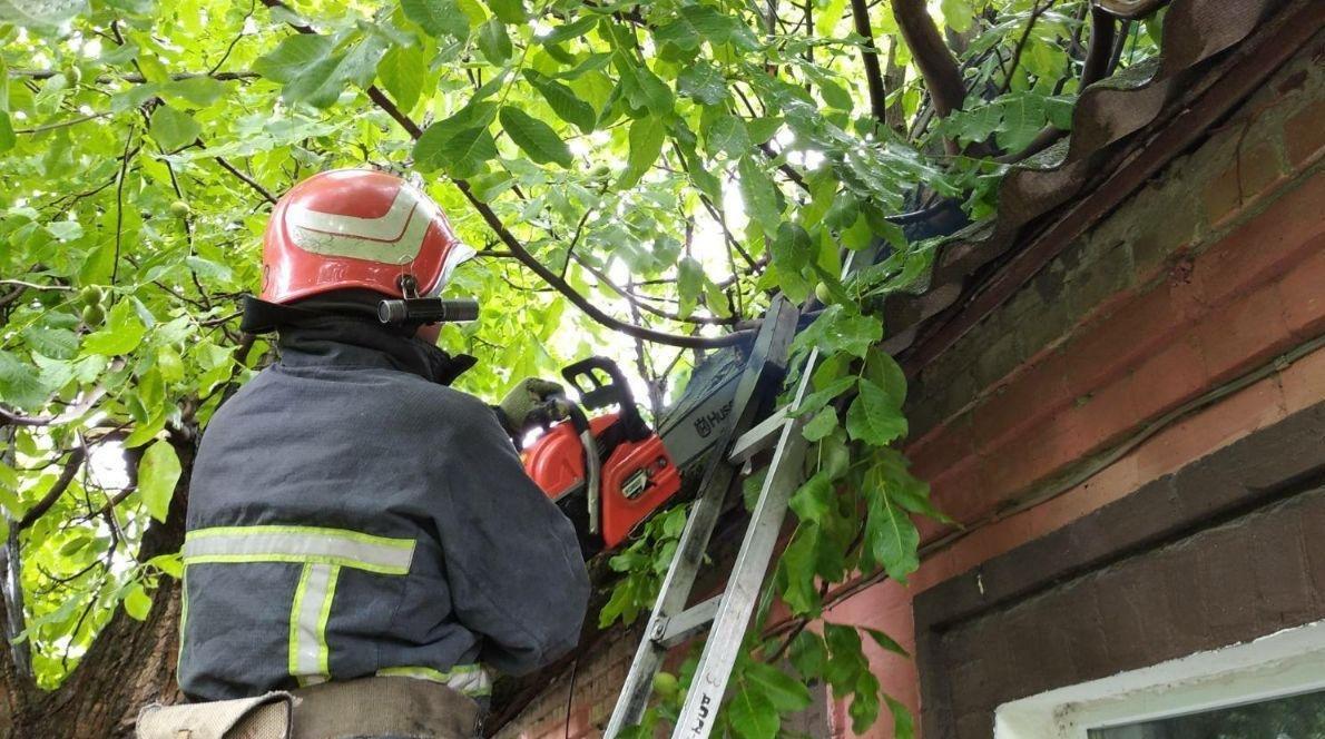 Бійці кіровоградського гарнізону прибрали аварійні дерева (ФОТО), фото-5